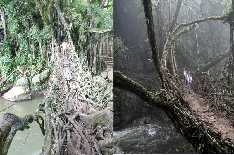 Root connect, west Sumatera = Living Root Bridges, India