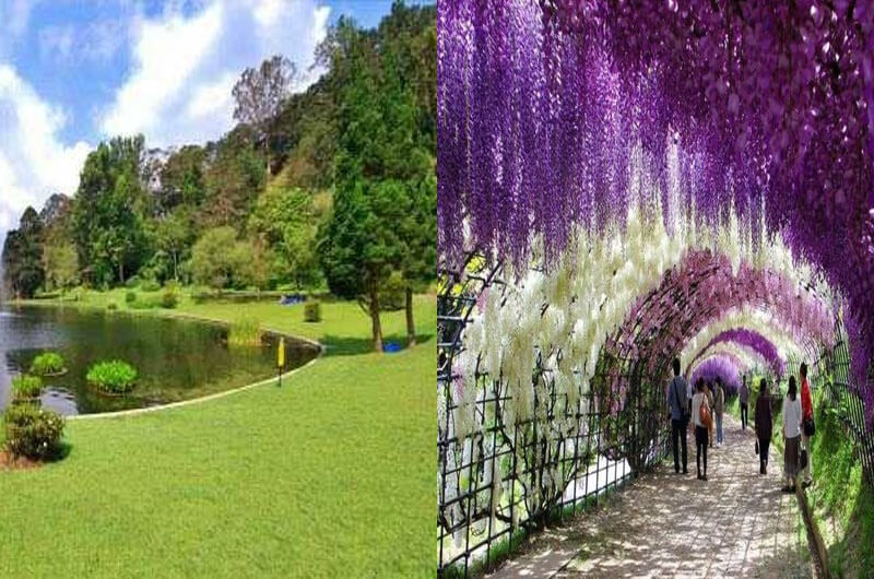 Cibodas Botanical Garden, Cianjur = Tokyo, Japan
